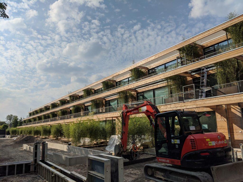16. September 2020: Bambus aus Ligurien als Sichtschutz.
